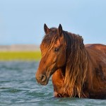 Banker_Horse