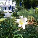 pecan tree inn lily