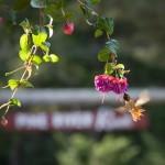 Leavenworth_Area+photography (2)