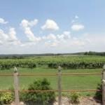von jacob vineyard