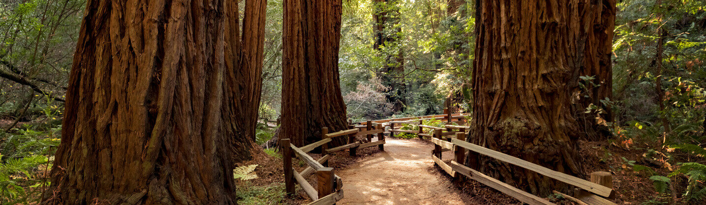 Photo of redwoods national forest